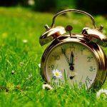 Vertikutace trávníku a kdy ji provést?