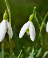 Přichází jaro: co dělat na jaře na zahradě?