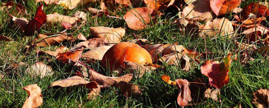Zahrada na podzim: Na co nezapomenout